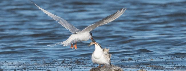 Birding Photo Quiz: February 2018