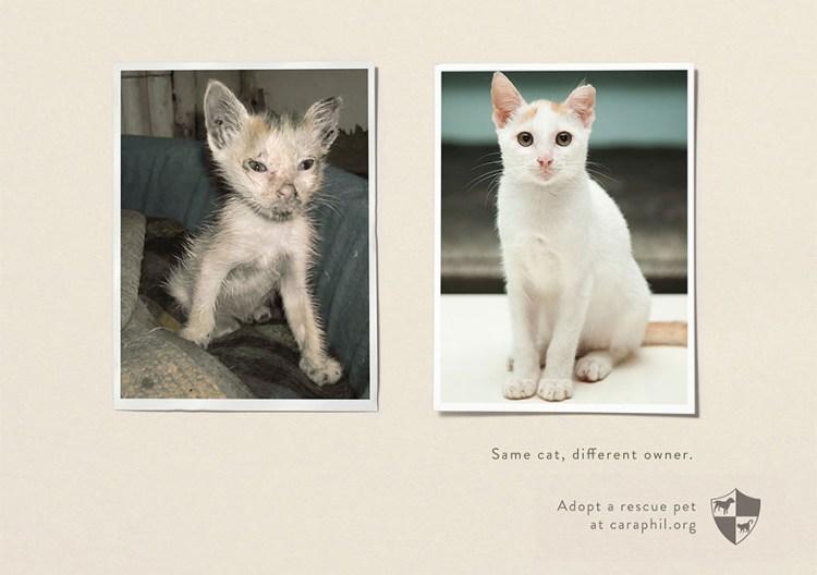 Esempio di comunicazione no-pro t sull'adozione di gatti