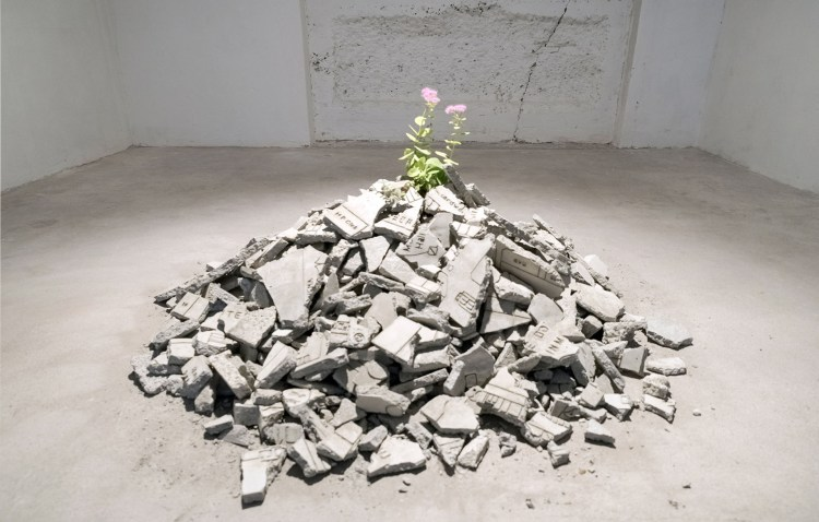 Andrea Francolino, Performance of a Plant.