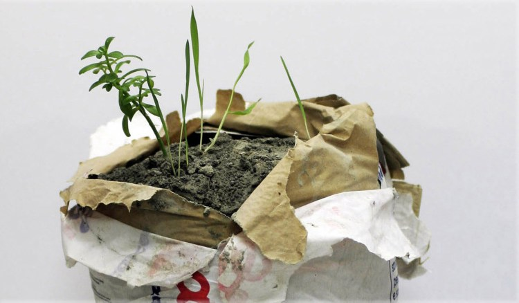 Andrea Francolino, Performance of a plant