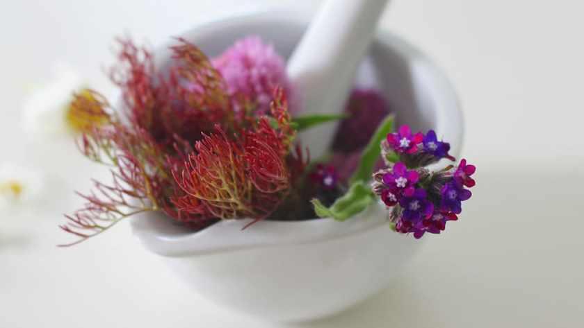 Phytothérapie : 7 remèdes de grand-mères validés par la science !
