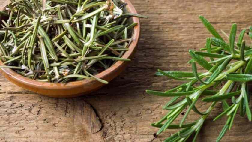 Romarin épice phytothérapie Actinutrition