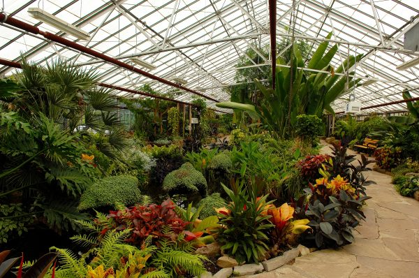The Key To Optimal Growth in Your Greenhouse