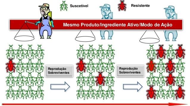 estágios de manejo da resistencia de insetos