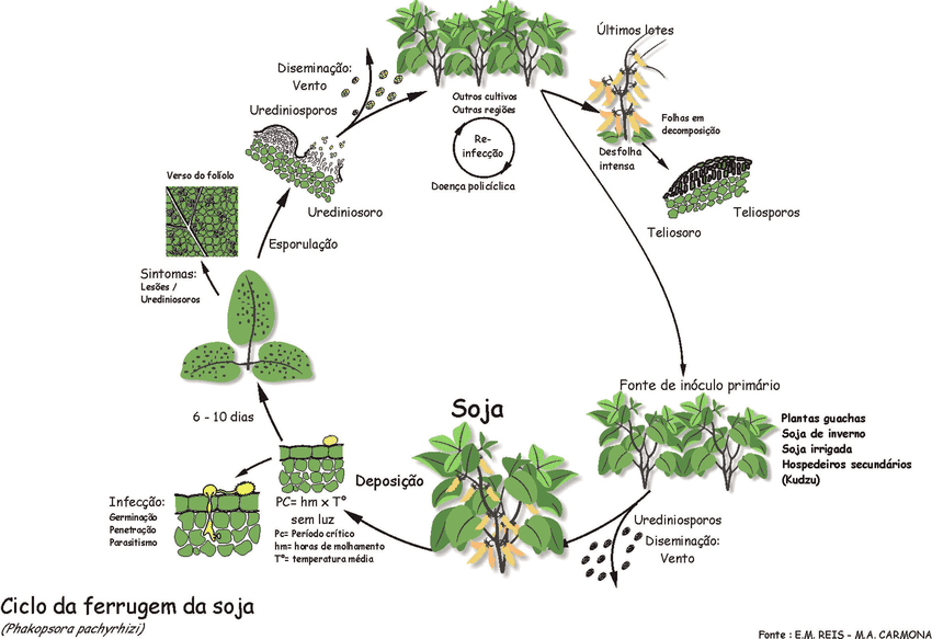 ciclo da ferrugem na soja
