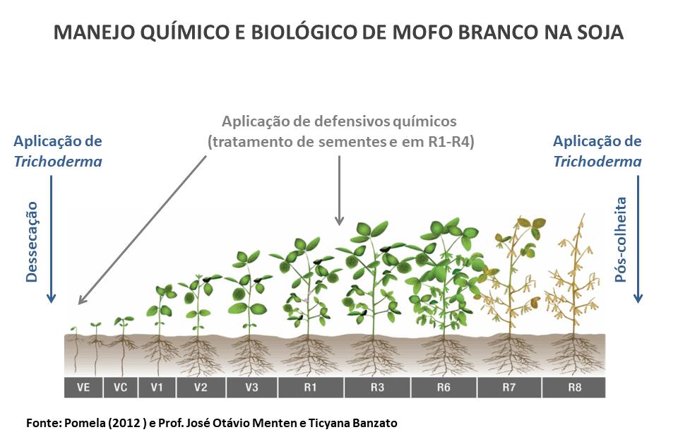 manejo-quimico-biologico-defensivos-naturais