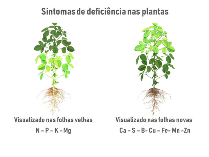 sintomas-plantas-deficiencias
