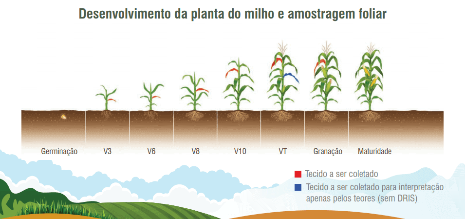 5- fertilidade-do-solo-e-nutrição-de-plantas