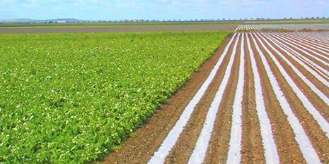 3-cultivo-de-arroz