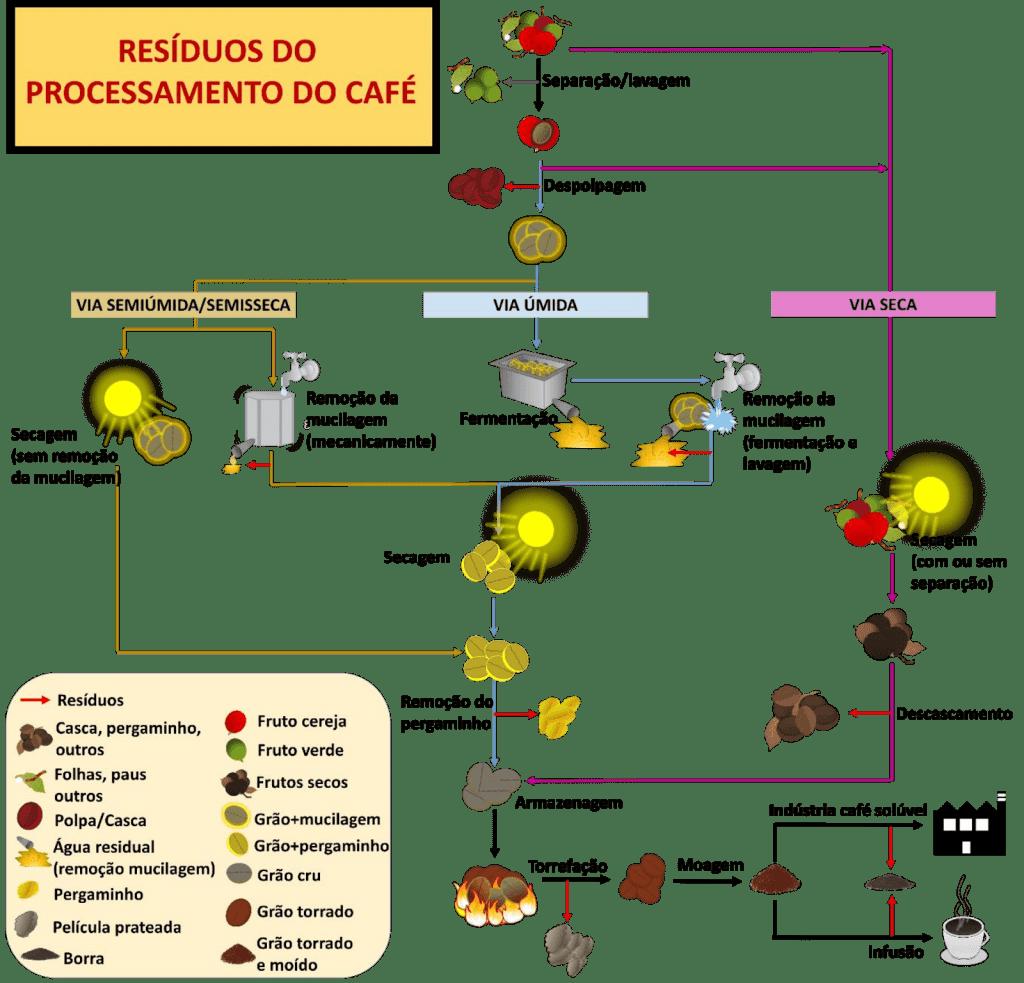 Imagem ilustrativa com etapas do processamento de café