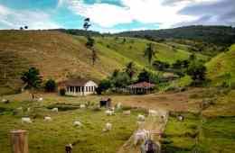 seguro rural 2020