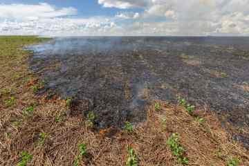 consequências das queimadas no solo