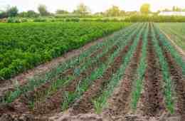 diversificação de culturas na fazenda