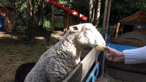 Julien le mouton
