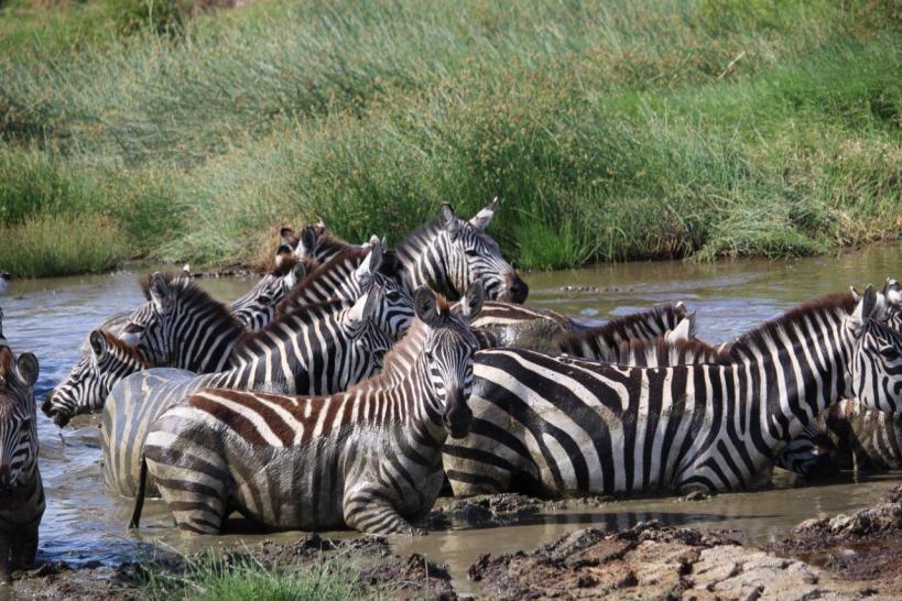 safari in November