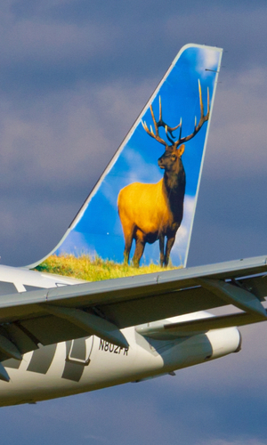 frontier airlines livery tail