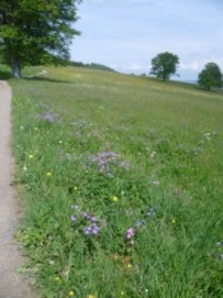Foto einer Blumenwiese