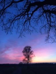 Foto Herbstbäume vor Wolken mit Morgenröte