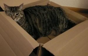 Foto einer Katze im Karton