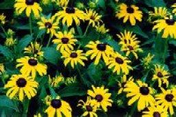 Foto eines Blumenbeetes