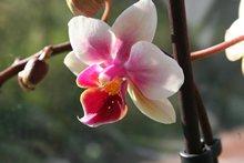 Foto einen Blüte