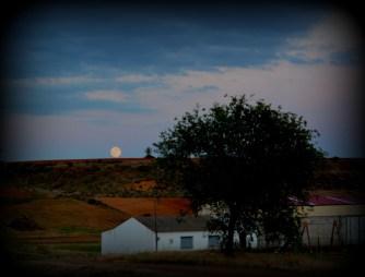 093 La Luna Enamorada del Arbol Solitario Alcuetas