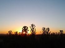 194 Arbustos observando los colores del atardecer Fáfilas