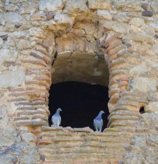 085 - Palomas en el Castillo