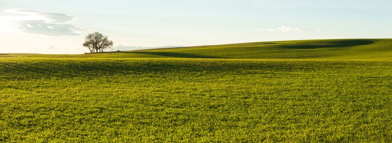 El Rincón del Árbol Oteador