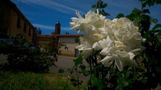 La Rosa y la Iglesia