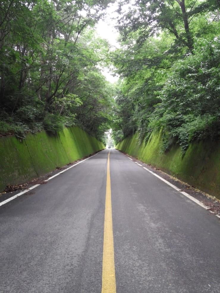 단양 주말 여행코스 사진찍기 좋은 곳 이끼터널