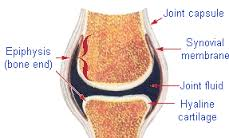 Typical joint that can be affected by Capsulitis