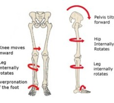 Effects of the Hips on the Feet