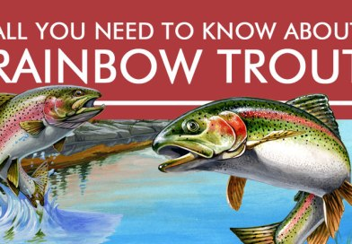 All You Need to Know About Rainbow Trout