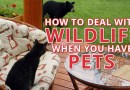 How to Deal With Wildlife When You Have Pets