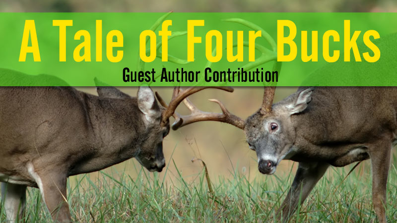 Tale of Four Bucks story