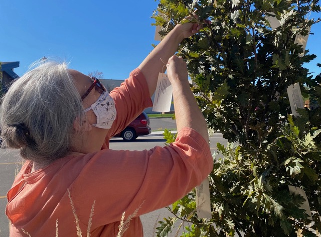 "Lori Brack places poems of hope in a downtown tree for her installation ""Poet-Tree."""
