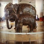 Elephants at IG, Delhi