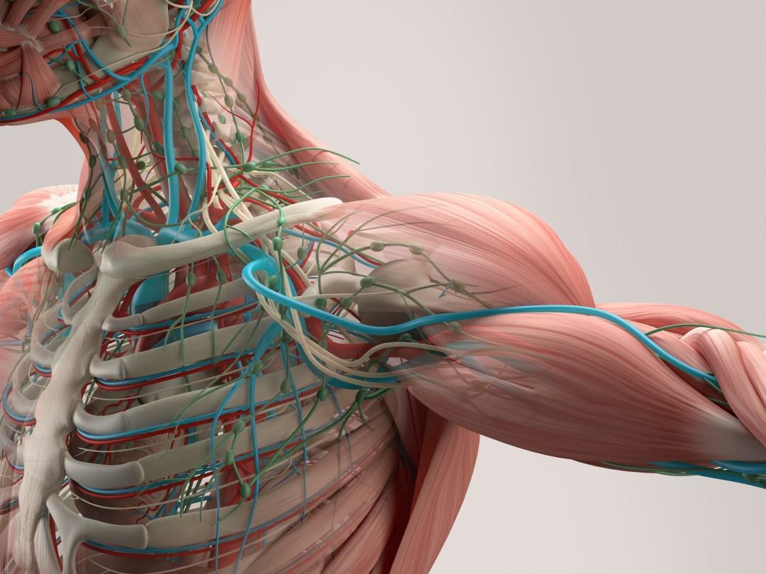 amn-academy-nervous-system