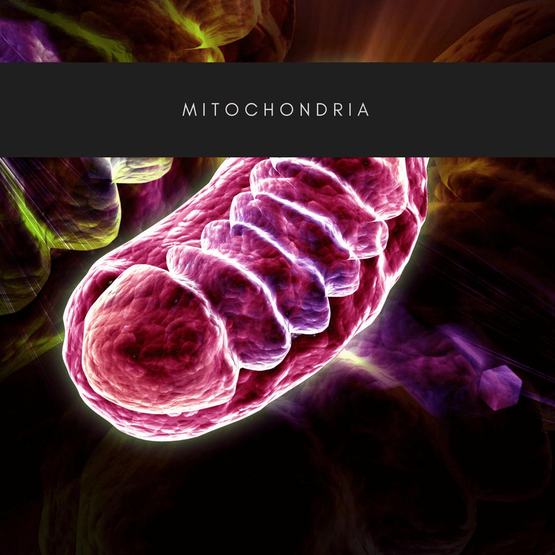 mitochondria amn academy atp