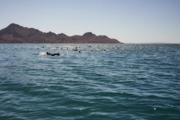 Loreto Snorkeling Trip 2018