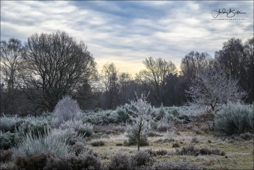 An image of heathland on a frosty morning