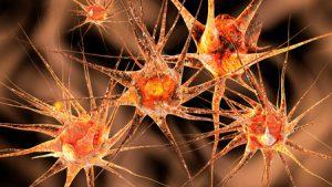 25634425 - 3d illustration of neuronal cells.