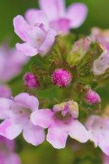 Blüte im Detail