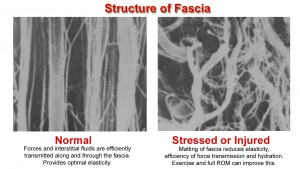 Structure of Fascia copy