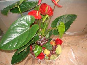 Anthurium, rosas y frutas