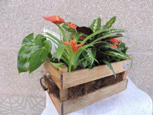 Caja de Plantas de Temporada