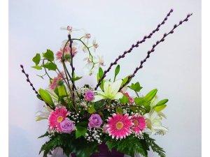 Centro de Orquideas y Flores de Temporada.