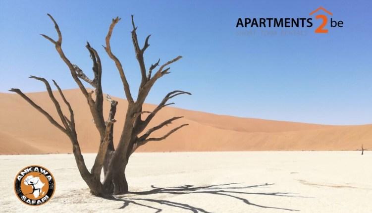 Photo safari in Namibia