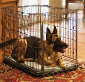 pet-dog-crate-training-in-apartment